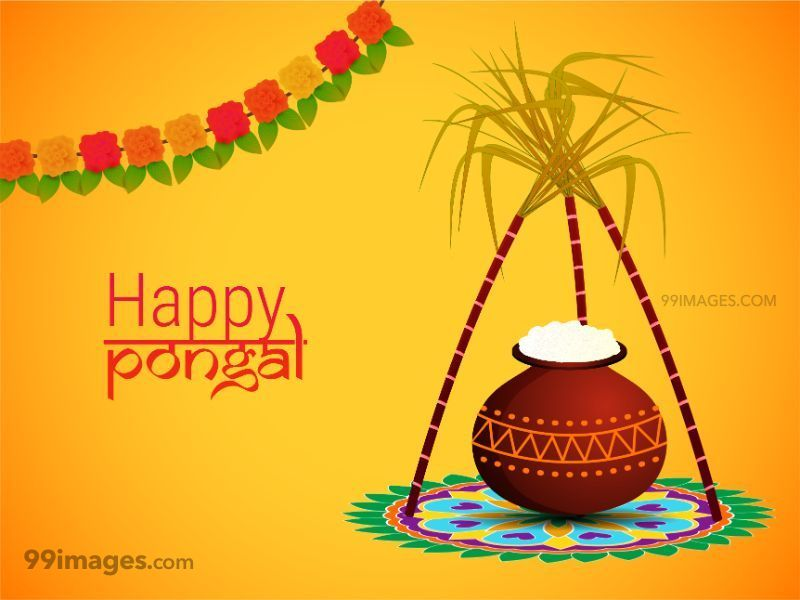 [14th January 2021] Happy Pongal (Pongal Vazhthukkal) WhatsApp DP Images, Wishes, Quotes, Messages HD (148033) - Pongal