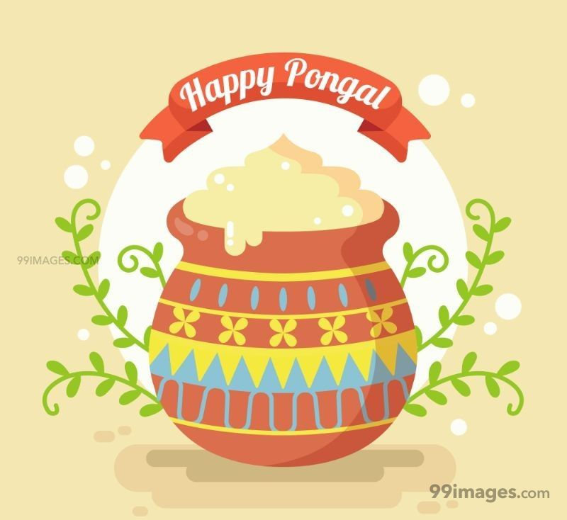 [15th January 2020] Happy Pongal (Pongal Vazhthukkal) WhatsApp DP Images, Wishes, Quotes, Messages HD (148159) - Pongal