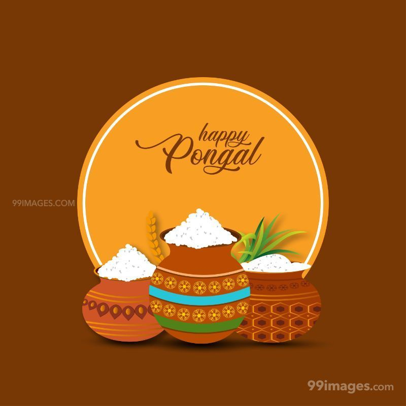 [15th January 2020] Happy Pongal (Pongal Vazhthukkal) WhatsApp DP Images, Wishes, Quotes, Messages HD (148037) - Pongal