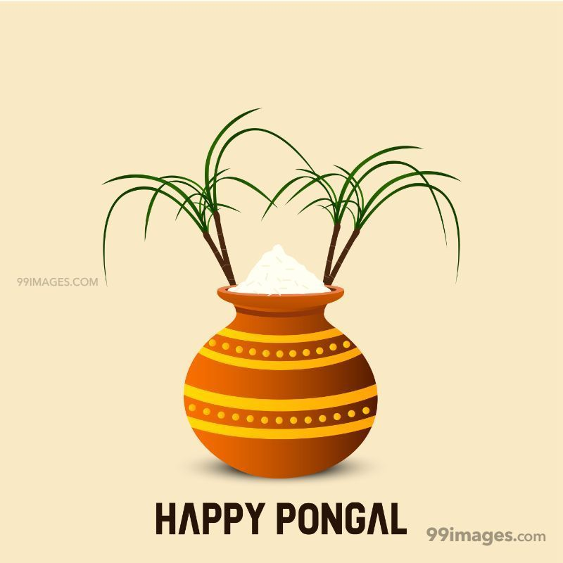 [15th January 2020] Happy Pongal (Pongal Vazhthukkal) WhatsApp DP Images, Wishes, Quotes, Messages HD (148019) - Pongal