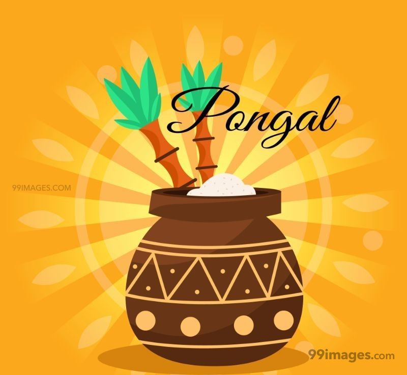 [15th January 2020] Happy Pongal (Pongal Vazhthukkal) WhatsApp DP Images, Wishes, Quotes, Messages HD (148160) - Pongal