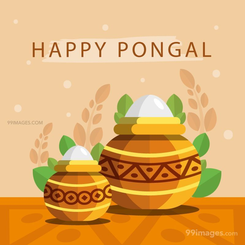 [15th January 2020] Happy Pongal (Pongal Vazhthukkal) WhatsApp DP Images, Wishes, Quotes, Messages HD (148180) - Pongal