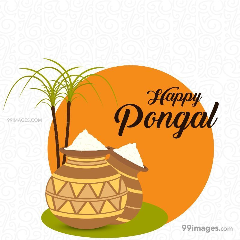[15th January 2020] Happy Pongal (Pongal Vazhthukkal) WhatsApp DP Images, Wishes, Quotes, Messages HD (148018) - Pongal