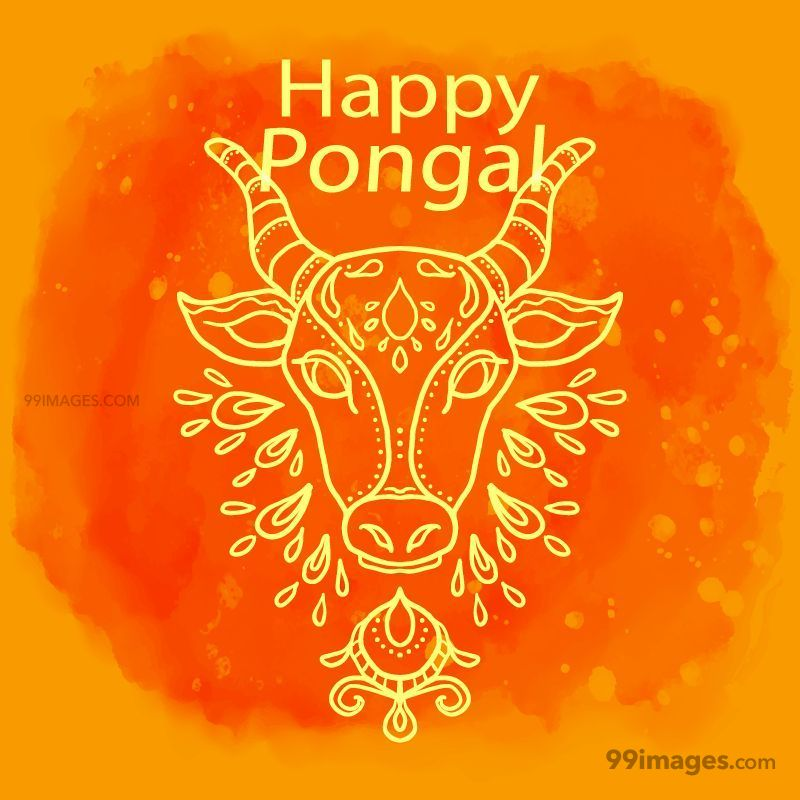 [15th January 2020] Happy Pongal (Pongal Vazhthukkal) WhatsApp DP Images, Wishes, Quotes, Messages HD (147996) - Pongal