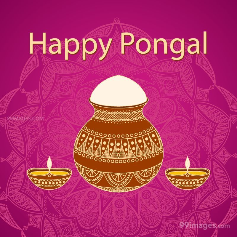 [14th January 2021] Happy Pongal (Pongal Vazhthukkal) WhatsApp DP Images, Wishes, Quotes, Messages HD (148091) - Pongal
