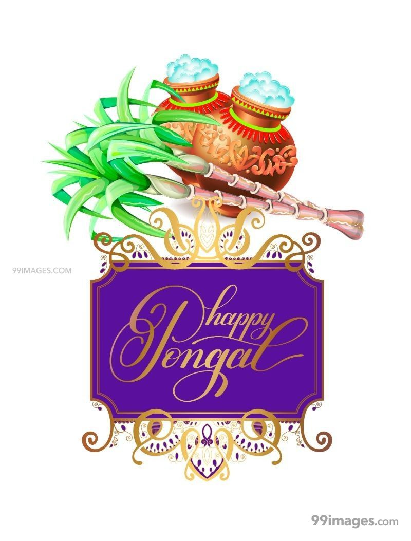 [15th January 2020] Happy Pongal (Pongal Vazhthukkal) WhatsApp DP Images, Wishes, Quotes, Messages HD (147993) - Pongal