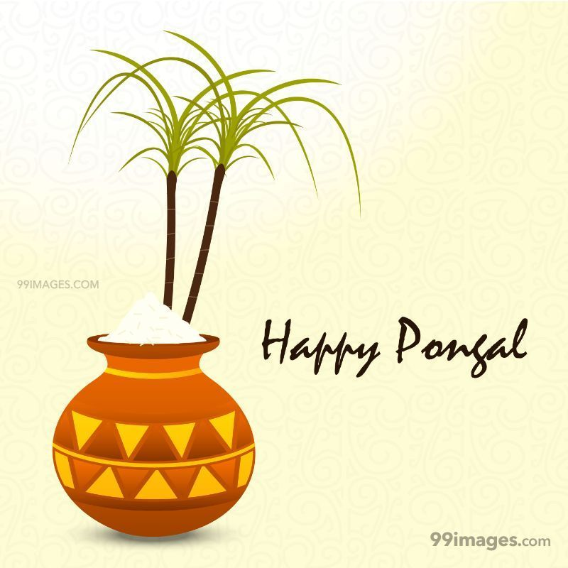 [15th January 2020] Happy Pongal (Pongal Vazhthukkal) WhatsApp DP Images, Wishes, Quotes, Messages HD (148021) - Pongal