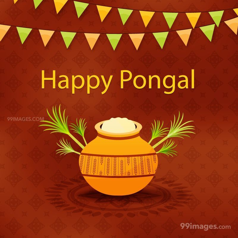 [15th January 2020] Happy Pongal (Pongal Vazhthukkal) WhatsApp DP Images, Wishes, Quotes, Messages HD (147989) - Pongal