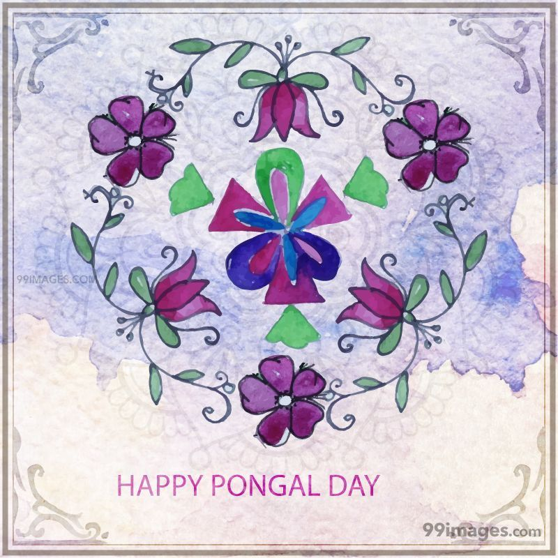 [15th January 2020] Happy Pongal (Pongal Vazhthukkal) WhatsApp DP Images, Wishes, Quotes, Messages HD (148098) - Pongal