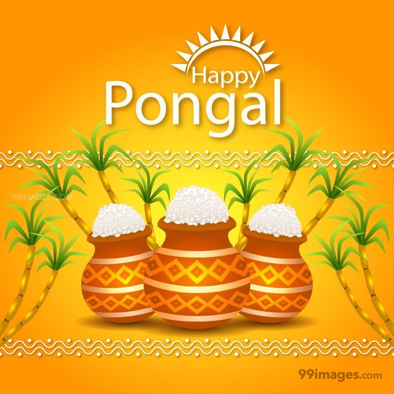 [14th January 2021] Happy Pongal (Pongal Vazhthukkal) WhatsApp DP Images, Wishes, Quotes, Messages HD (148053) - Pongal