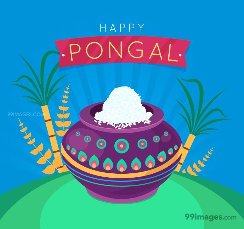 [15th January 2020] Happy Pongal (Pongal Vazhthukkal) WhatsApp DP Images, Wishes, Quotes, Messages HD (148179) - Pongal
