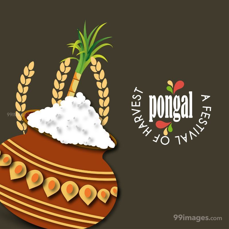 [14th January 2021] Happy Pongal (Pongal Vazhthukkal) WhatsApp DP Images, Wishes, Quotes, Messages HD (148041) - Pongal
