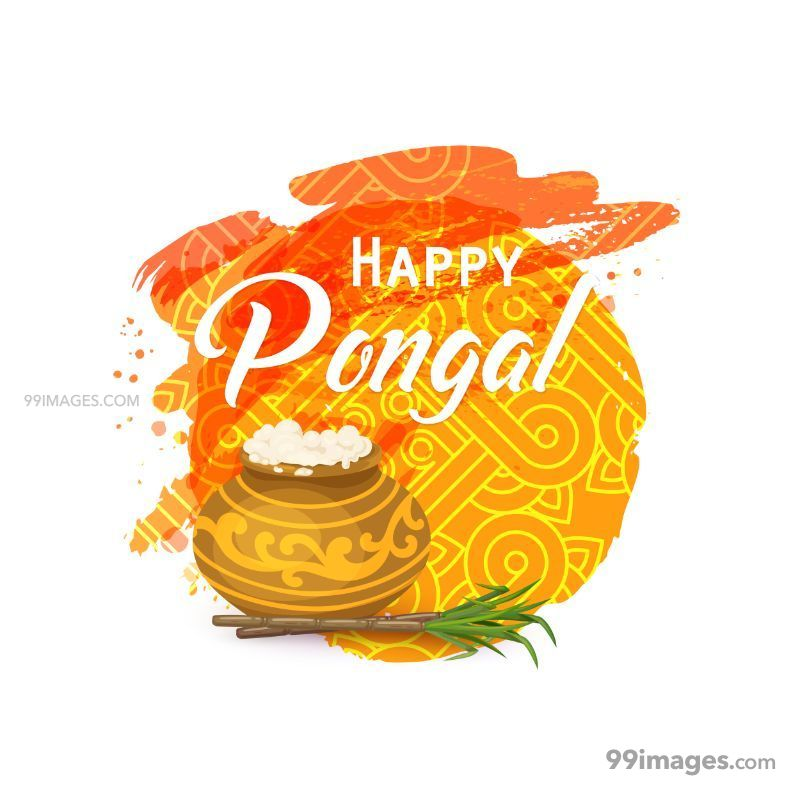 [15th January 2020] Happy Pongal (Pongal Vazhthukkal) WhatsApp DP Images, Wishes, Quotes, Messages HD (147990) - Pongal