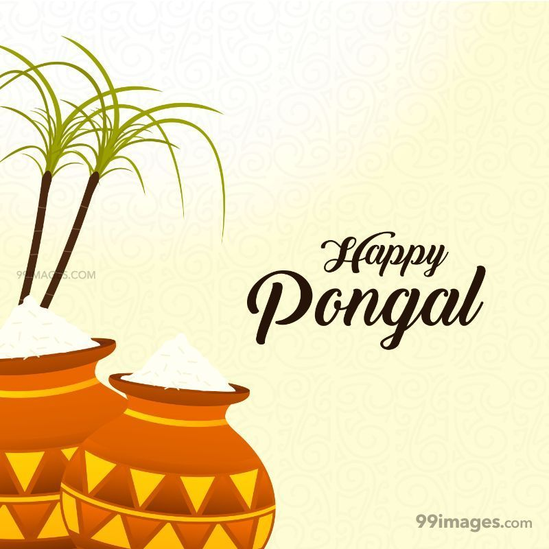 [15th January 2020] Happy Pongal (Pongal Vazhthukkal) WhatsApp DP Images, Wishes, Quotes, Messages HD (148029) - Pongal