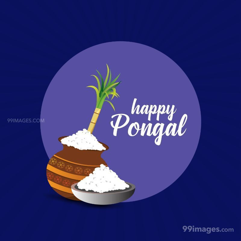 [15th January 2020] Happy Pongal (Pongal Vazhthukkal) WhatsApp DP Images, Wishes, Quotes, Messages HD (148036) - Pongal