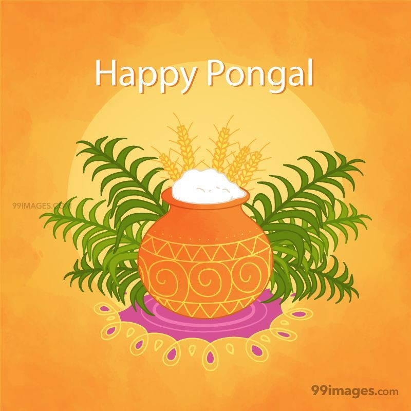 [15th January 2020] Happy Pongal (Pongal Vazhthukkal) WhatsApp DP Images, Wishes, Quotes, Messages HD (148149) - Pongal