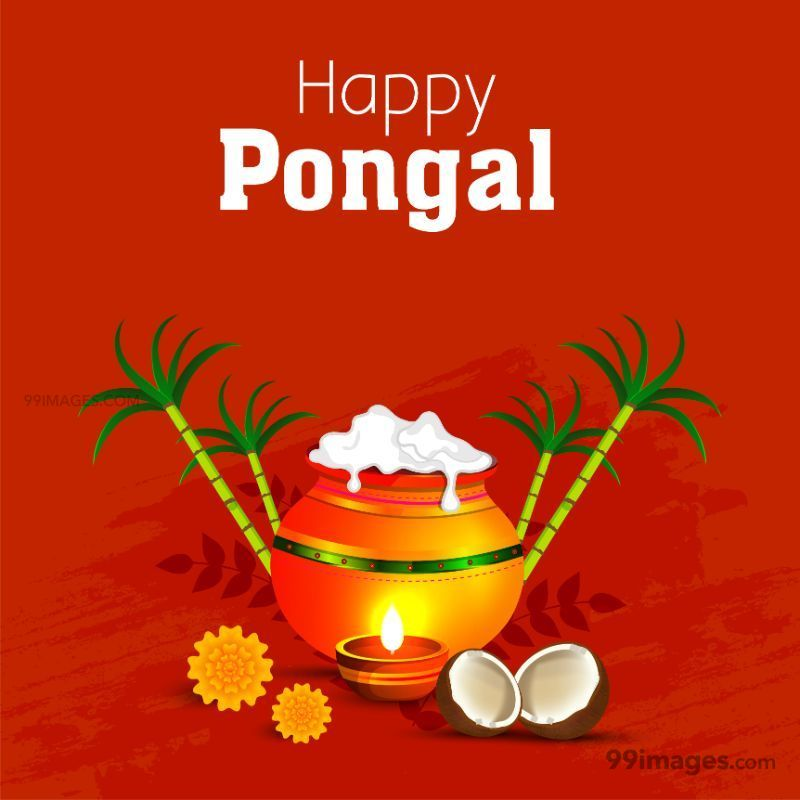 [14th January 2021] Happy Pongal (Pongal Vazhthukkal) WhatsApp DP Images, Wishes, Quotes, Messages HD (148001) - Pongal
