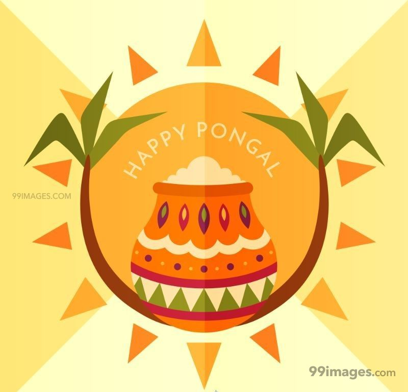 [15th January 2020] Happy Pongal (Pongal Vazhthukkal) WhatsApp DP Images, Wishes, Quotes, Messages HD (148185) - Pongal