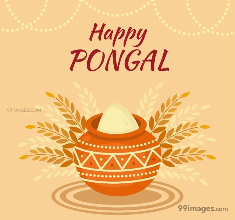 [15th January 2020] Happy Pongal (Pongal Vazhthukkal) WhatsApp DP Images, Wishes, Quotes, Messages HD (148134) - Pongal