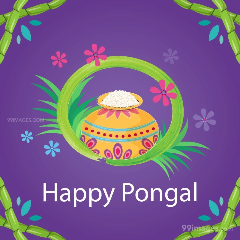 [15th January 2020] Happy Pongal (Pongal Vazhthukkal) WhatsApp DP Images, Wishes, Quotes, Messages HD (148145) - Pongal