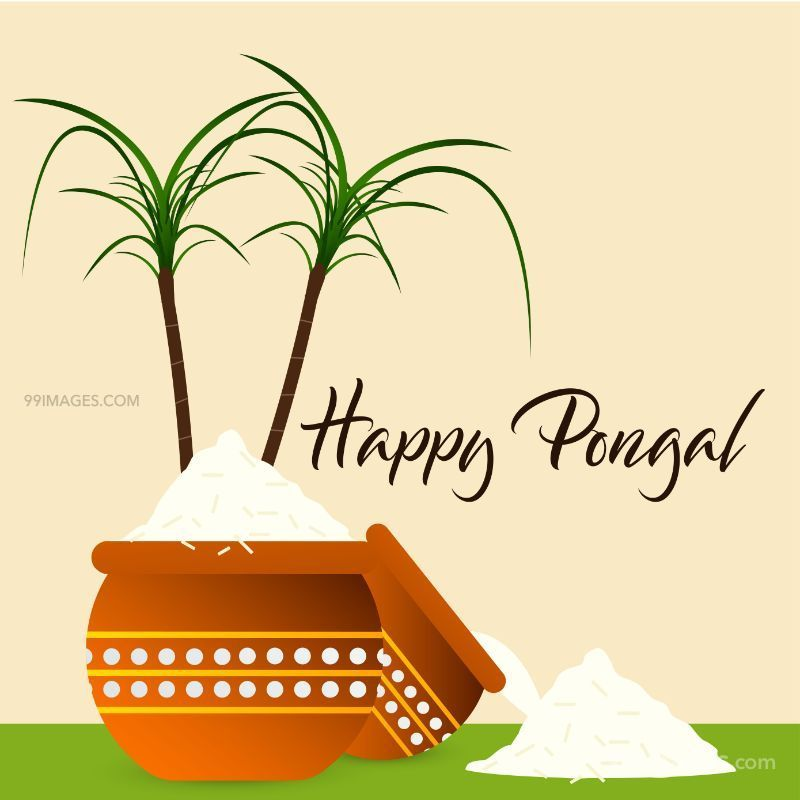 [15th January 2020] Happy Pongal (Pongal Vazhthukkal) WhatsApp DP Images, Wishes, Quotes, Messages HD (148007) - Pongal
