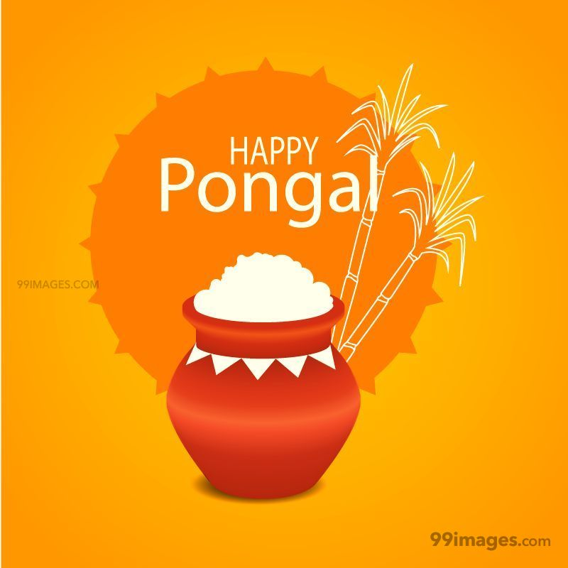 [15th January 2020] Happy Pongal (Pongal Vazhthukkal) WhatsApp DP Images, Wishes, Quotes, Messages HD (148084) - Pongal