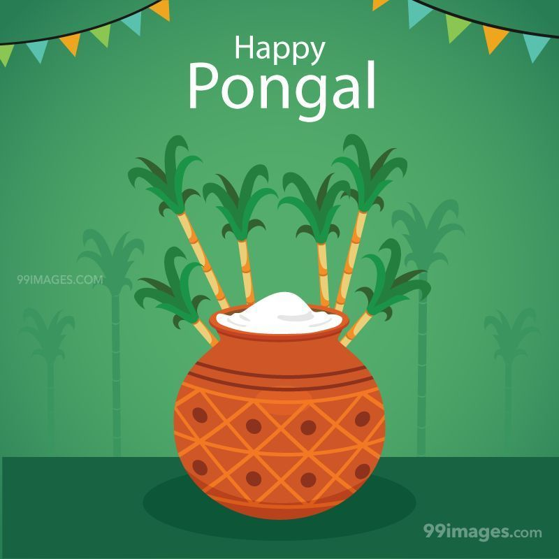 [15th January 2020] Happy Pongal (Pongal Vazhthukkal) WhatsApp DP Images, Wishes, Quotes, Messages HD (148077) - Pongal