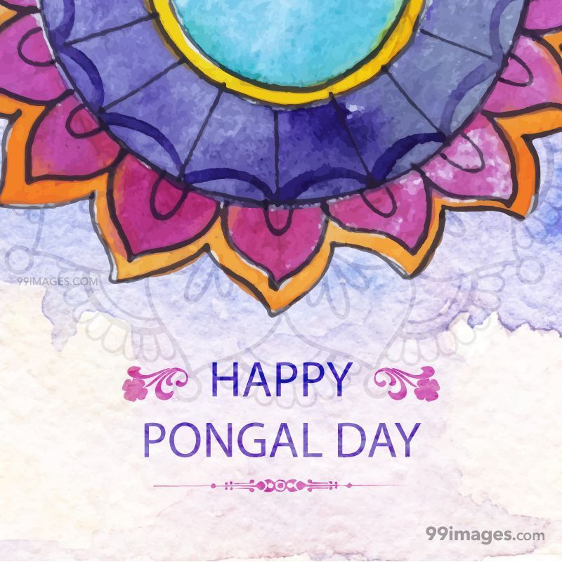 [14th January 2021] Happy Pongal (Pongal Vazhthukkal) WhatsApp DP Images, Wishes, Quotes, Messages HD (148097) - Pongal