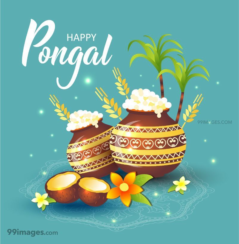 [14th January 2021] Happy Pongal (Pongal Vazhthukkal) WhatsApp DP Images, Wishes, Quotes, Messages HD (148006) - Pongal