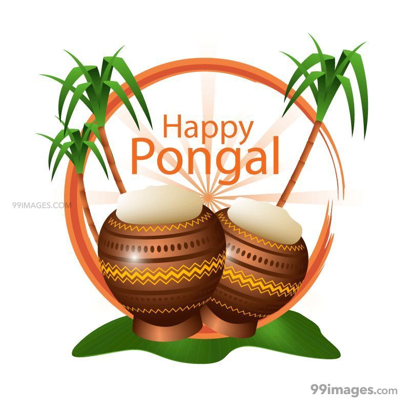 [15th January 2020] Happy Pongal (Pongal Vazhthukkal) WhatsApp DP Images, Wishes, Quotes, Messages HD (148176) - Pongal