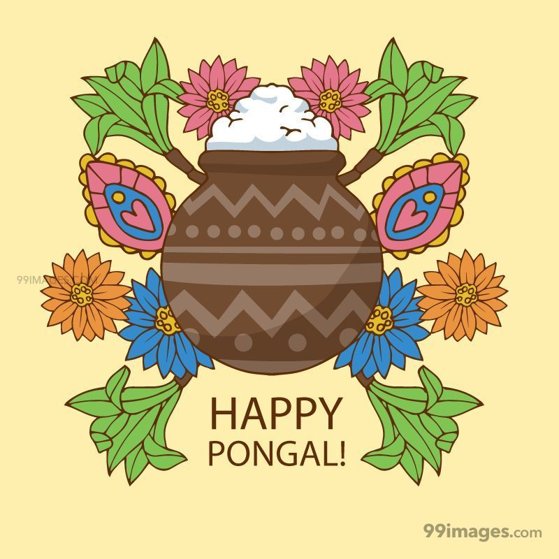 [15th January 2020] Happy Pongal (Pongal Vazhthukkal) WhatsApp DP Images, Wishes, Quotes, Messages HD (148174) - Pongal