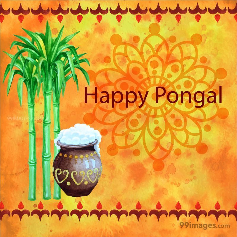 [15th January 2020] Happy Pongal (Pongal Vazhthukkal) WhatsApp DP Images, Wishes, Quotes, Messages HD (148075) - Pongal