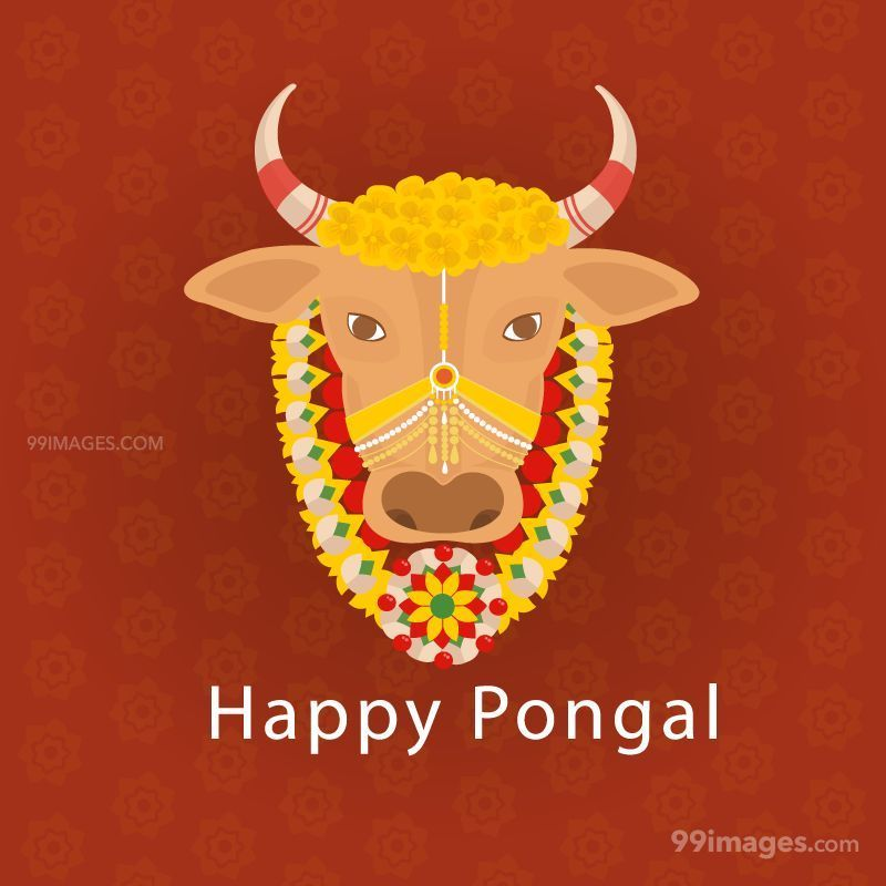 [15th January 2020] Happy Pongal (Pongal Vazhthukkal) WhatsApp DP Images, Wishes, Quotes, Messages HD (148065) - Pongal
