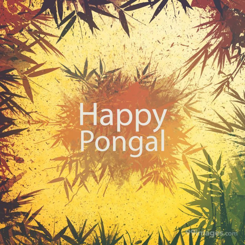 [15th January 2020] Happy Pongal (Pongal Vazhthukkal) WhatsApp DP Images, Wishes, Quotes, Messages HD (148068) - Pongal
