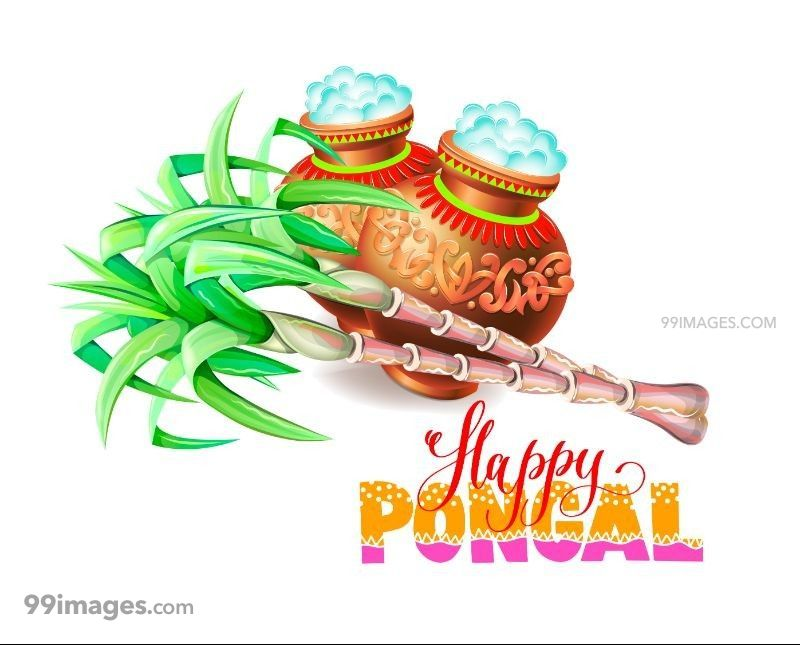 [15th January 2020] Happy Pongal (Pongal Vazhthukkal) WhatsApp DP Images, Wishes, Quotes, Messages HD (147992) - Pongal