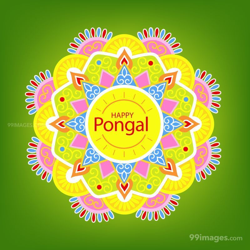 [15th January 2020] Happy Pongal (Pongal Vazhthukkal) WhatsApp DP Images, Wishes, Quotes, Messages HD (148081) - Pongal