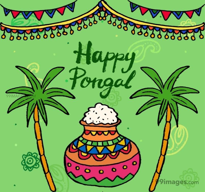 [15th January 2020] Happy Pongal (Pongal Vazhthukkal) WhatsApp DP Images, Wishes, Quotes, Messages HD (148140) - Pongal