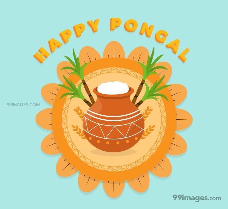 [15th January 2020] Happy Pongal (Pongal Vazhthukkal) WhatsApp DP Images, Wishes, Quotes, Messages HD (148166) - Pongal