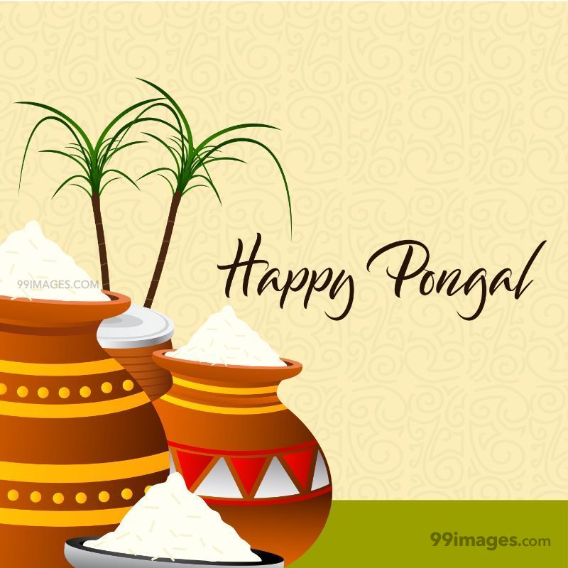 [15th January 2020] Happy Pongal (Pongal Vazhthukkal) WhatsApp DP Images, Wishes, Quotes, Messages HD (148025) - Pongal