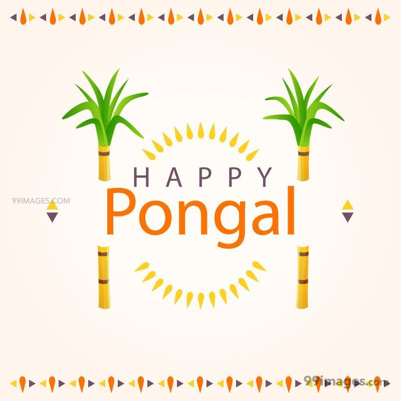 [14th January 2021] Happy Pongal (Pongal Vazhthukkal) WhatsApp DP Images, Wishes, Quotes, Messages HD (148087) - Pongal