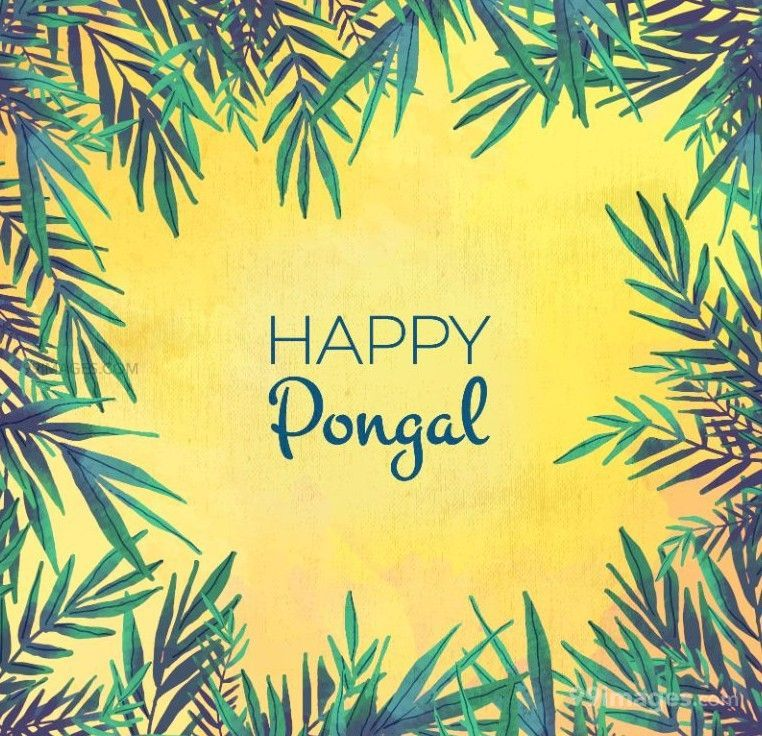 [15th January 2020] Happy Pongal (Pongal Vazhthukkal) WhatsApp DP Images, Wishes, Quotes, Messages HD (148133) - Pongal