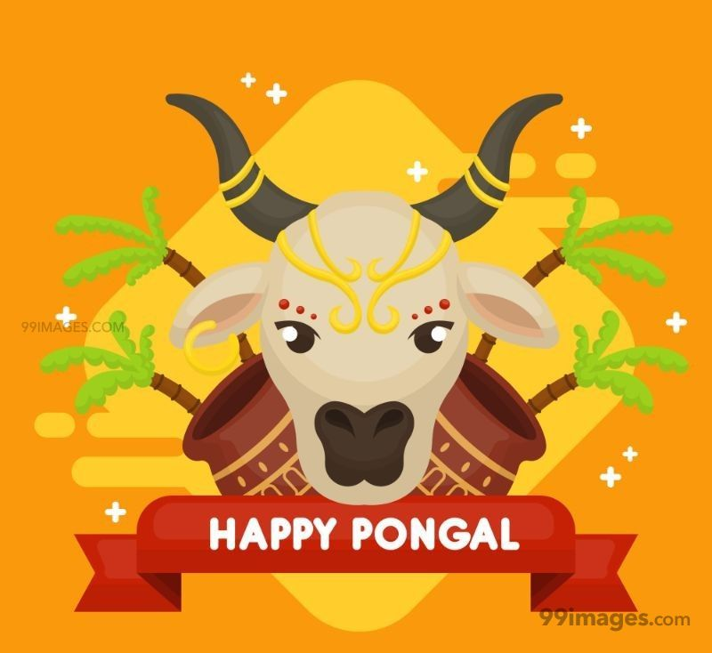[15th January 2020] Happy Pongal (Pongal Vazhthukkal) WhatsApp DP Images, Wishes, Quotes, Messages HD (148157) - Pongal