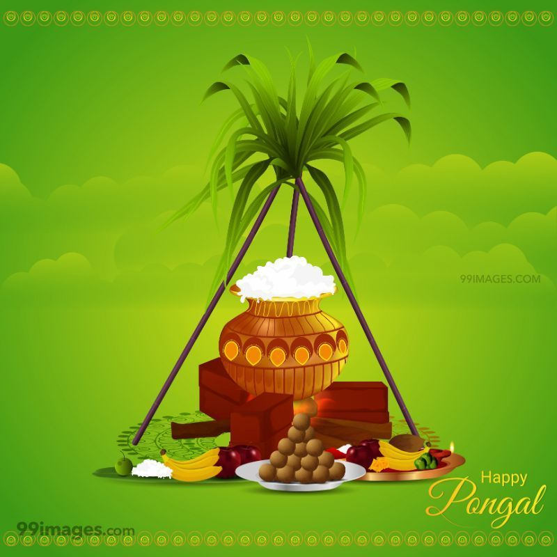[14th January 2021] Happy Pongal (Pongal Vazhthukkal) WhatsApp DP Images, Wishes, Quotes, Messages HD (708990) - Pongal