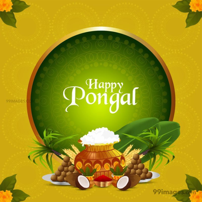 [14th January 2021] Happy Pongal (Pongal Vazhthukkal) WhatsApp DP Images, Wishes, Quotes, Messages HD (709002) - Pongal