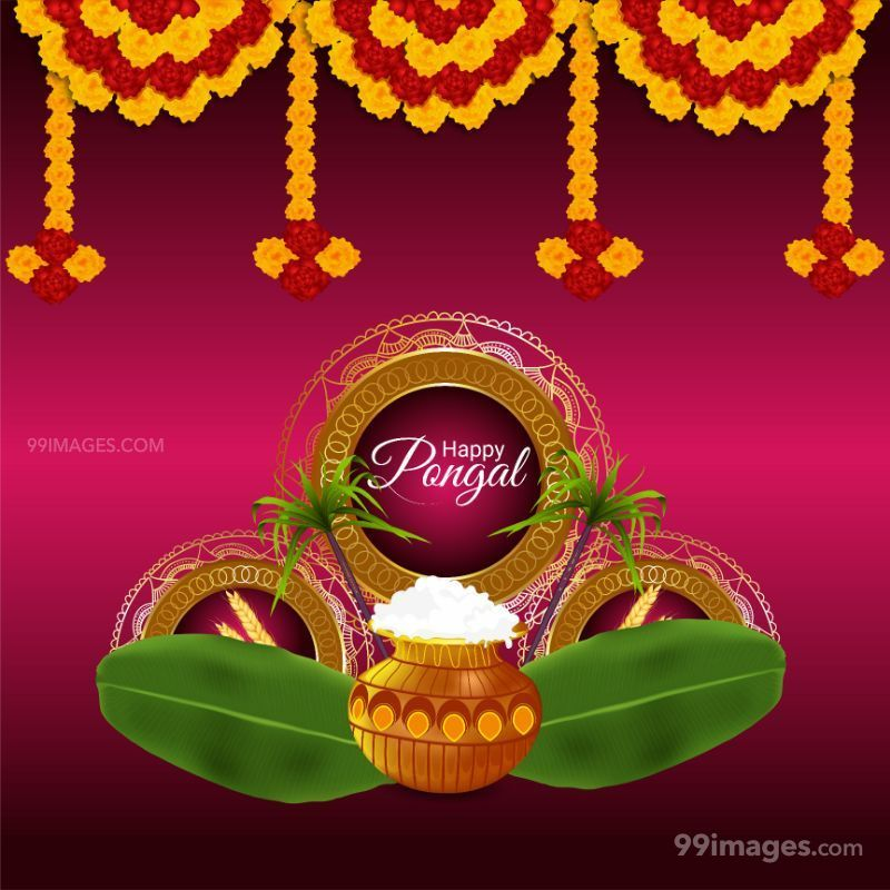 [14th January 2021] Happy Pongal (Pongal Vazhthukkal) WhatsApp DP Images, Wishes, Quotes, Messages HD (708999) - Pongal
