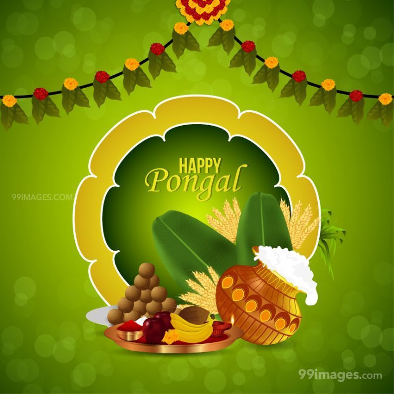 [14th January 2021] Happy Pongal (Pongal Vazhthukkal) WhatsApp DP Images, Wishes, Quotes, Messages HD (709003) - Pongal