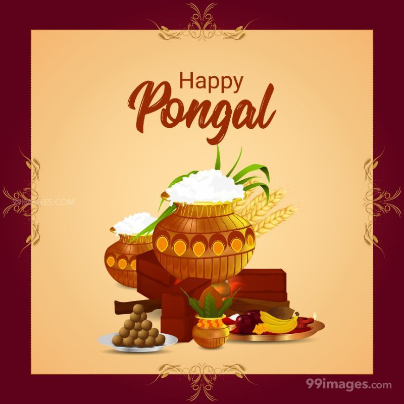 [14th January 2021] Happy Pongal (Pongal Vazhthukkal) WhatsApp DP Images, Wishes, Quotes, Messages HD (708993) - Pongal