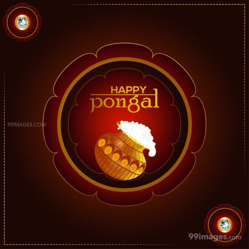 [14th January 2021] Happy Pongal (Pongal Vazhthukkal) WhatsApp DP Images, Wishes, Quotes, Messages HD (708998) - Pongal