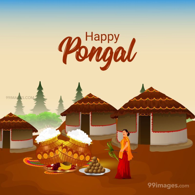 [14th January 2021] Happy Pongal (Pongal Vazhthukkal) WhatsApp DP Images, Wishes, Quotes, Messages HD (708991) - Pongal