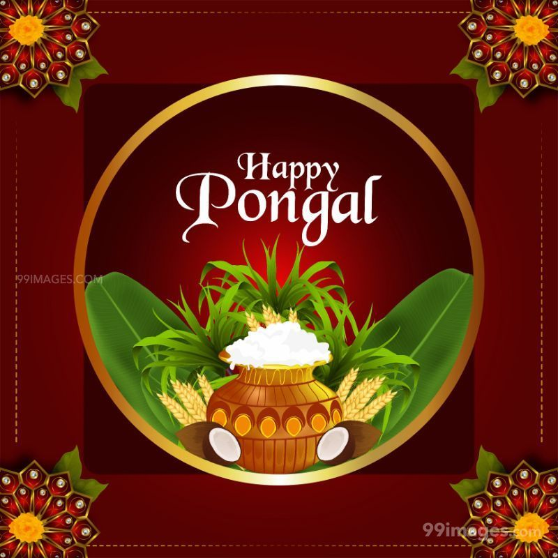 [14th January 2021] Happy Pongal (Pongal Vazhthukkal) WhatsApp DP Images, Wishes, Quotes, Messages HD (708996) - Pongal